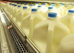 "Harvard Scientist Urges People to Stop Drinking ""Low-Fat"" Milk.Harvard Scientist Urges People to Stop Drinking ""Low-Fat"" Milk. Vicks Vaporub, Healthy Holistic Living, Healthy Living, Plastic Milk, Fat Free Milk, Stop Drinking, Drinking Milk, Acide Aminé, Raw Milk"
