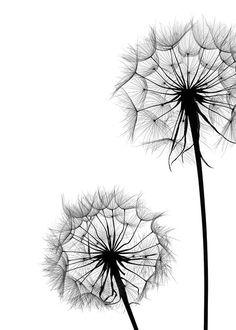 Dandelion no1 Affiche