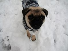 """""""This white stuff, it's COLD!"""" (Olives first time in the snow)"""