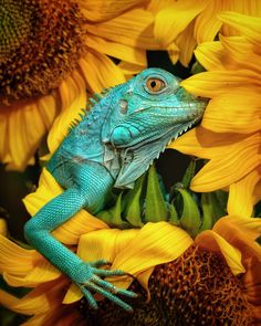 50 of the World's Most Gorgeous Photos of Animals | by Jack Shepherd | Feb, 2021 | Tenderly Photography Contests, Free Photography, Wildlife Photography, Photography Awards, Reptiles, Mammals, Lizards, Amphibians, Chameleons