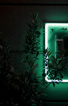 GREEN #green #neon-light #neon-color #free-leaves