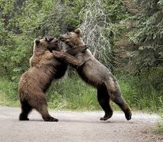 bears standing up images - Google 検索