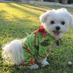 Etsy Christmas Pajamas for Small Dogs Green by LittleDogFashion, $42.00// perfect for running down the stairs to see what santa brought him