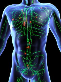 Keep Your Lymph Flowing Smoothly and Properly