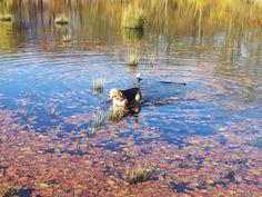 Koosje takes a swim