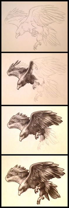 Wedge Tailed Eagle I sketched out for my boyfriends tattoo idea
