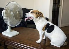 If you are feeling the heat, you can bet your pets are, too. Now that we are in the dog days of summer (i.e. the really hot part), keep your pets cool.