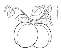 Apricots fruits coloring pages for kids, printable free