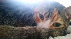 La pajera #gato #cat #mañana #morning