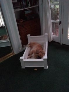 Too cute.  Dog bed.