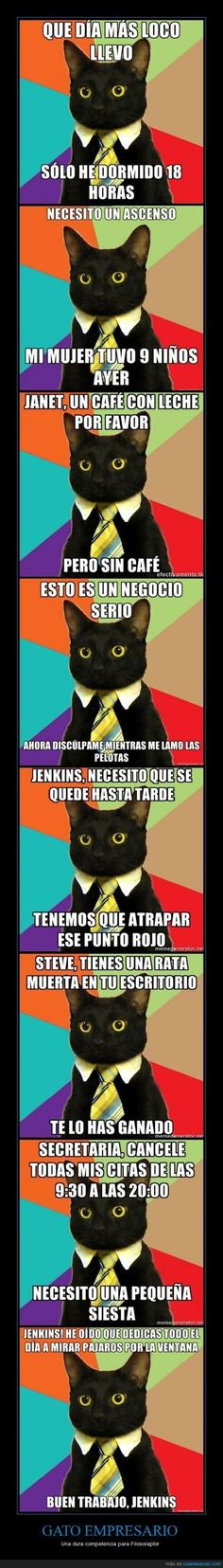 Vida de gatos: