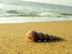 vypeen beach