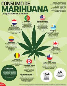 #SabíasQue 177.6 millones de personas consumen marihuana en el mundo.  #Infografia