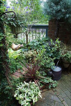 葉っぱだらけ : ほんの小さな庭