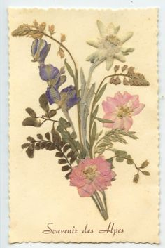 High Quality Alps Mountain Dried Flower Add On Collage Fantasy Original Old 1930s  Postcard