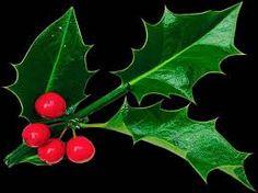 Αποτέλεσμα εικόνας για holly and ivy images free