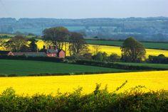 Shapwick, England