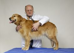 Dogs New Wave in Cancer Detection?