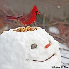 A snowy bird feeder!