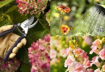 These Amazing Tips Will Keep Your Plants Blooming Continuously And For Longer