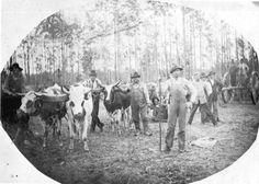 Florida Memory - Logging crew and team of oxen pulling a high-wheeler - Graceville, Florida