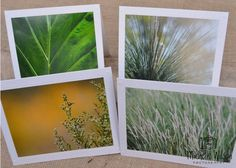 Nature Collection Card Pack...4 cards... Nature's Beauty, Leaf, Swaying Grass and Pine ...Fine Art Photography Greeting Cards