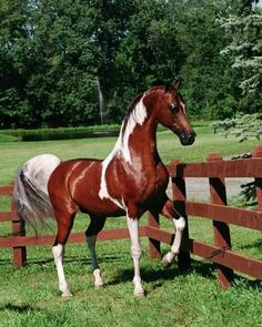 Arabian Stallion Color of Fame Soul of Horses Horses And Dogs, Cute Horses, Pretty Horses, Horse Love, Show Horses, Beautiful Horse Pictures, Most Beautiful Horses, Animals Beautiful, Majestic Horse