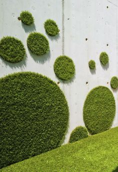 If you are one of those lucky ones who have garden in front of their houses then you must also take care of it and beautify it for making it more attractive. One of the things that can change the look of your garden all together is its fence.