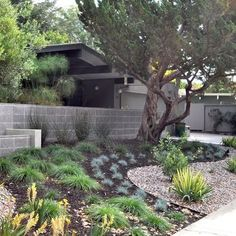 Landscape Mid Century Modern; found more on this landscaping project here…