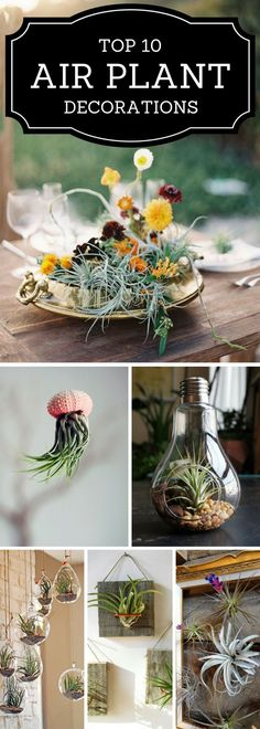 Plant Decor - TOP 10 Beautiful Ideas Air plants are beautiful, whimsical, and the perfect plant for those who always forget to waterAir plants are beautiful, whimsical, and the perfect plant for those who always forget to water Mini Plants, Indoor Plants, Garden Plants, Indoor Herbs, Moss Garden, Cactus Plants, Air Plant Display, Plant Decor, Air Plant Terrarium