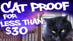 Cat Proofing a Balcony with No Roof for Less than $30