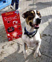 Angel for Animals Network- rescue Ca.  Website'shttp://www.facebook.com/AngelsForAnimals...  http://twitter.com/AFA_Network