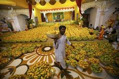 A Hindu priest carries a basket of mangoes to distribute among devotees after it was offered to Hindu God Lord Krishna