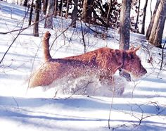 Séamus has launch sequence activated. Irish Terriers rock!