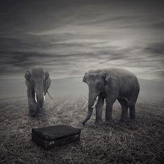 three trunks!!
