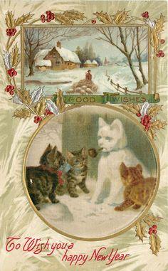 Bonne année 2019 et bonnes bouffardes à tous ! 8d69a31c9a12ba66288d151e980d9f2f--white-cats-happy-new-year