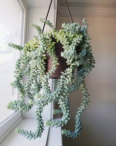 Indoor Plants Discover The Best Indoor Hanging Plants The best indoor hanging plants that will bring life into your home. These Low maintinence hanging plants are easy for beginners. Cacti And Succulents, Planting Succulents, Planting Flowers, Cactus Plants, Tomato Plants, Shade Plants, Tropical Plants, Air Plants, Potted Plants