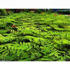 名前は知らない #green #plant #philippines #フィリピン #植物