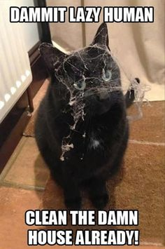 Black Cat - From Top 100 Awesome Funny pics, photos and memes. - SillyCool
