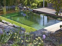 A pure pool may add life to your yard, supplementing the appearance of a garden or well-kept lawn. Still, even just a pure swimming pool can be constructed with a more conventional design, allowing for a wide assortment of styles… Continue Reading → Swimming Pool Pond, Natural Swimming Ponds, Above Ground Swimming Pools, Swimming Pool Designs, Oberirdische Pools, Cool Pools, Lap Pools, Indoor Pools, Fiberglass Pools