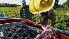 Le vignoble de Bordeaux: unique, pluriel et authentique
