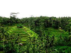 Bali Lookbook: A Paradise & A Love Story - Jetset Times