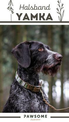 In unserer Werkstatt in Wien fertigen wir jede Leine und jedes Halsband für deinen Hund von Hand an. Verrate uns einfach die gewünschten Maße, wähle deine liebsten Farben und Materialen aus und wir stellen dein individuelles Produkt her. Pawsome | Nachhaltiges Hundezubehör | Halsband und Leine | Hundehalsband selber machen Dog Grooming, Cats, Animals, Dog Leash, Dog Accessories, Pooch Workout, Leather, Work Shop Garage, Gatos