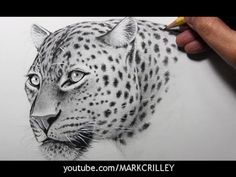 How to Draw a Leopard [Narrated, Step by Step] - YouTube