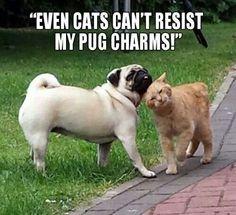 .pug charm