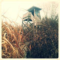 bird-watching tower