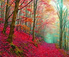 Amazing Autumn Forest