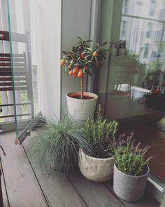 My Life, Plants, Plant, Planets
