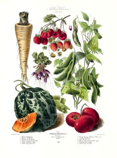 The Vegetable Garden, a reproduction of illustrations that were commissioned by the Parisian seed company Vilmorin-Andrieux & Cie in the late 1800s. This is a loose-leaf collection, which means it comes as a boxed set of 46 prints suitable for framing. By Taschen books.