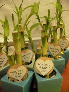 The gifts for our ACS Hope Lodge volunteer appreciation event:  Lucky bamboo because we are lucy to have them!